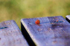 在野餐长凳上面的狂放的莓 免版税库存照片