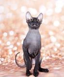 在金子的猫 免版税库存照片