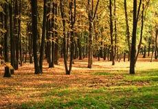 在金子秋天的结构树 免版税图库摄影