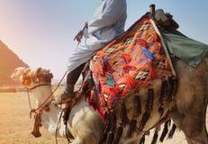 在金字塔的骆驼司机 免版税库存照片
