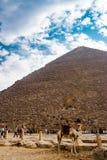 在金字塔附近的骆驼在开罗,埃及 免版税库存照片