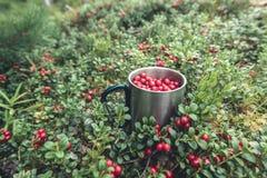 在金属杯子的红色蔓越桔在森林里 库存图片