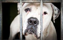 在金属栅格框架的白色狗 免版税图库摄影