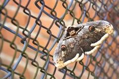 在金属栅格的伟大的蝴蝶 奴隶贩子的概念 免版税库存照片