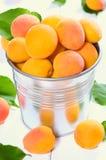 在金属桶的杏子 图库摄影