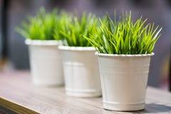 在金属桶的装饰美丽的绿草 库存照片