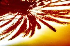 在金属片的热带棕榈树头反射 免版税库存照片