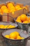在金属的新鲜的桔子在市场上用桶提 库存照片