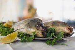 在金属盘的在白色桌上的生鱼与绿色和柠檬 户内 免版税库存照片
