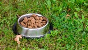 在金属碗的狗食在草 库存图片