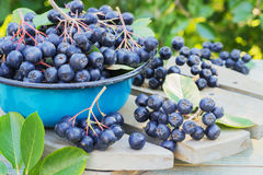 在金属碗的莓果堂梨属灌木 库存图片