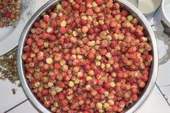 在金属碗的野草莓 免版税库存图片