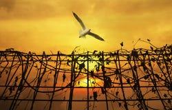 在金属篱芭上的海鸥飞行有在日落天空的干燥叶子的 免版税库存图片