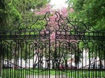在金属篱芭后的开花的树 免版税库存图片
