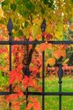 在金属篱芭的红色叶子 免版税库存照片