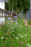 在金属篱芭的背景的花 图库摄影