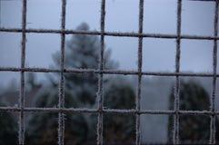 在金属篱芭,波希米亚的树冰 免版税库存照片