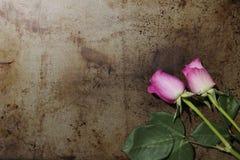在金属背景的两朵桃红色玫瑰 免版税库存照片
