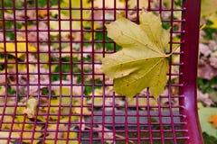 在金属长凳背景的秋天叶子 免版税库存图片