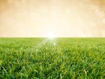 在金背景的绿草 库存图片