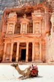 在金融管理系统前面的骆驼, Petra,乔丹 免版税库存照片