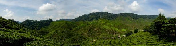 在金马仑高原,有绿色自然茶园的马来西亚的美好的全景视图在小山附近 免版税库存照片