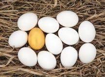 在金黄一个的白鸡蛋 免版税库存照片
