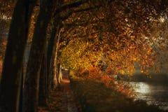 在金黄叶子下的散步 免版税库存图片