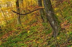在金黄叶子的美好的森林背景 库存图片