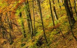 在金黄叶子的美好的森林背景 免版税库存照片