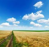 在金黄域和云彩的农村路 库存照片