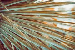 在金黄太阳火光的大圆的尖刻的棕榈树叶子 深绿颜色 时髦行家样式影片定了调子作用 热带假期 库存图片