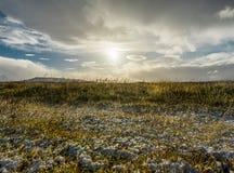 在金黄小时,冬天风景冰岛草雪冰湖 免版税库存照片