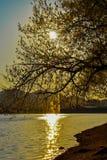 在金黄小时,地拉纳人工湖  免版税图库摄影