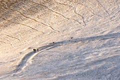 在金黄小时,走在道路的三个人和两条狗盖由在Monte Cucco翁布里亚,意大利的雪 库存照片