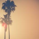 在金黄日落的棕榈树与拷贝空间 库存照片