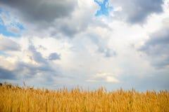 在金黄领域的多云天空 图库摄影