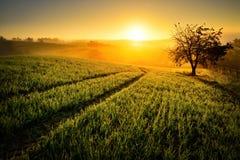 在金黄光的农村风景 免版税库存照片