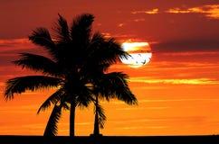 在金黄日落的剪影树 免版税库存照片