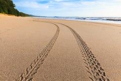 在金黄沙子的轨道 免版税库存照片