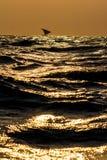 在金黄海的单桅三角帆船 库存图片