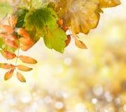 在金黄秋天口气的自然户外bokeh 免版税图库摄影