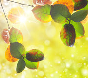 在金黄秋天口气的自然户外bokeh 库存照片