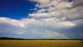 在金黄麦子的领域的彩虹 免版税库存照片