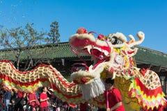 在金黄龙Parede期间的中国龙。 库存照片