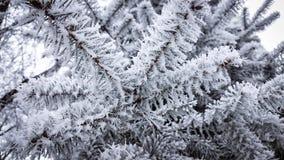 在针的树冰 图库摄影