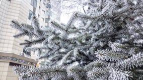 在针的树冰 免版税库存图片