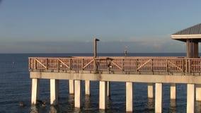 在钓鱼码头在黄昏-伟大蓝色的苍鹭的巢的麦尔兹堡海滩的鸟开会 股票录像