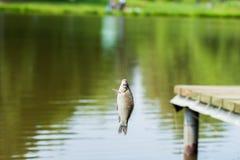 在钓鱼竿渔夫的Crucian鱼 免版税库存照片