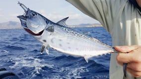 在钓鱼竿的红色金枪鱼 库存照片
